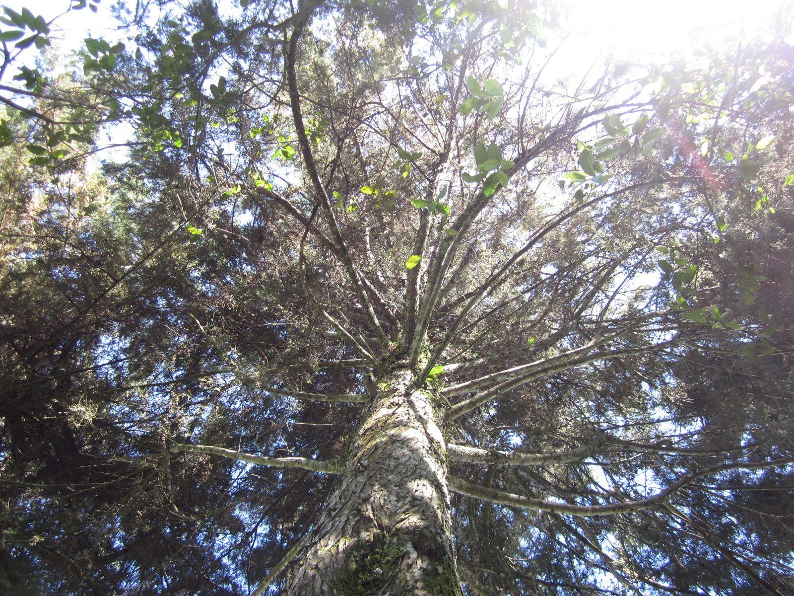 me fascina ver el cielo entre tus ramas