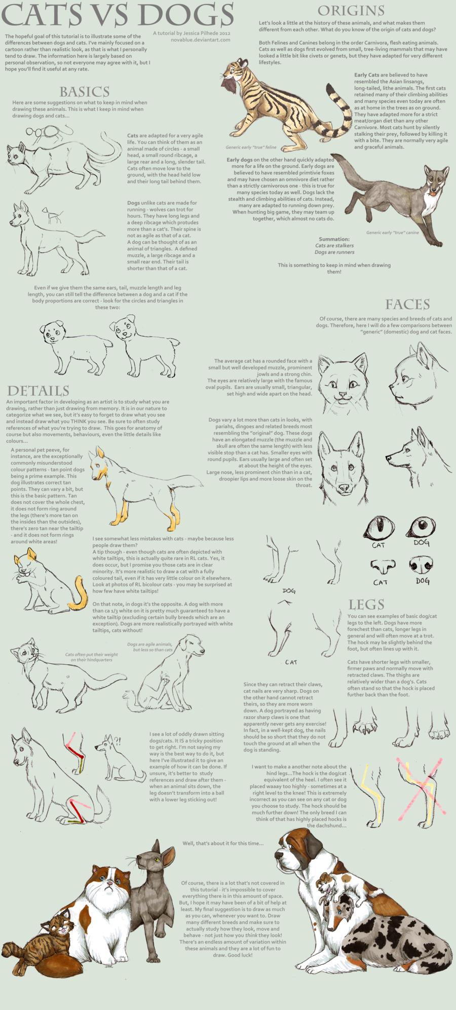 Cats vs Dogs Novablue Cat vs dog, Cat drawing tutorial