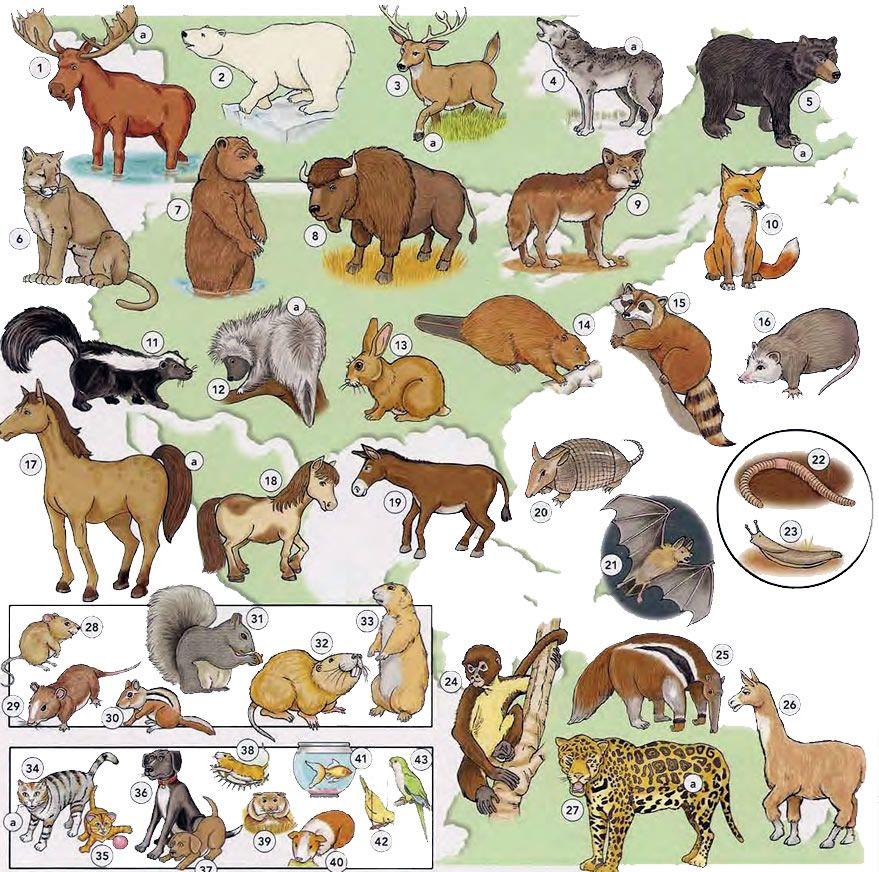 Animals and pets vocabulary. 1 moose a antler 2 polar bear