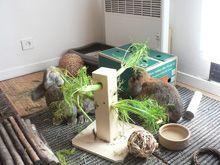 Jeux et jouets pour le lapin de compagnie marguerite et cie lapin pinterest lapin de - Jeux pour lapin a fabriquer ...