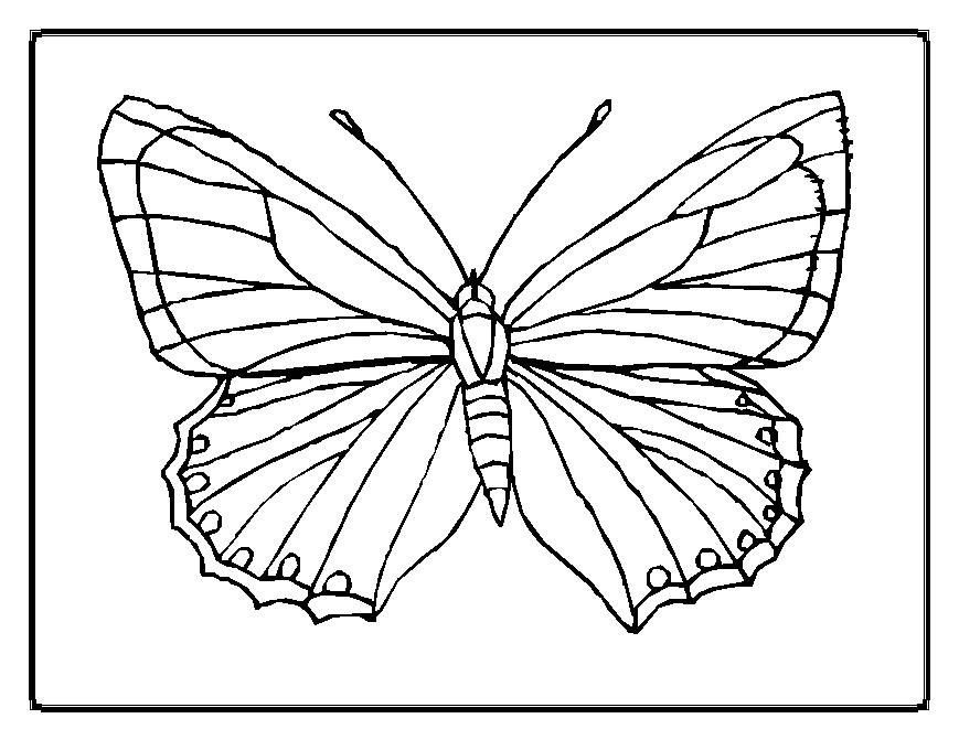 butterflies butterfly coloring pages butterfly 13