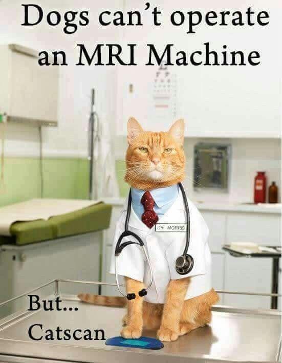 Dogs Can T Operate An Mri Machine But Cat Scan Cat Puns