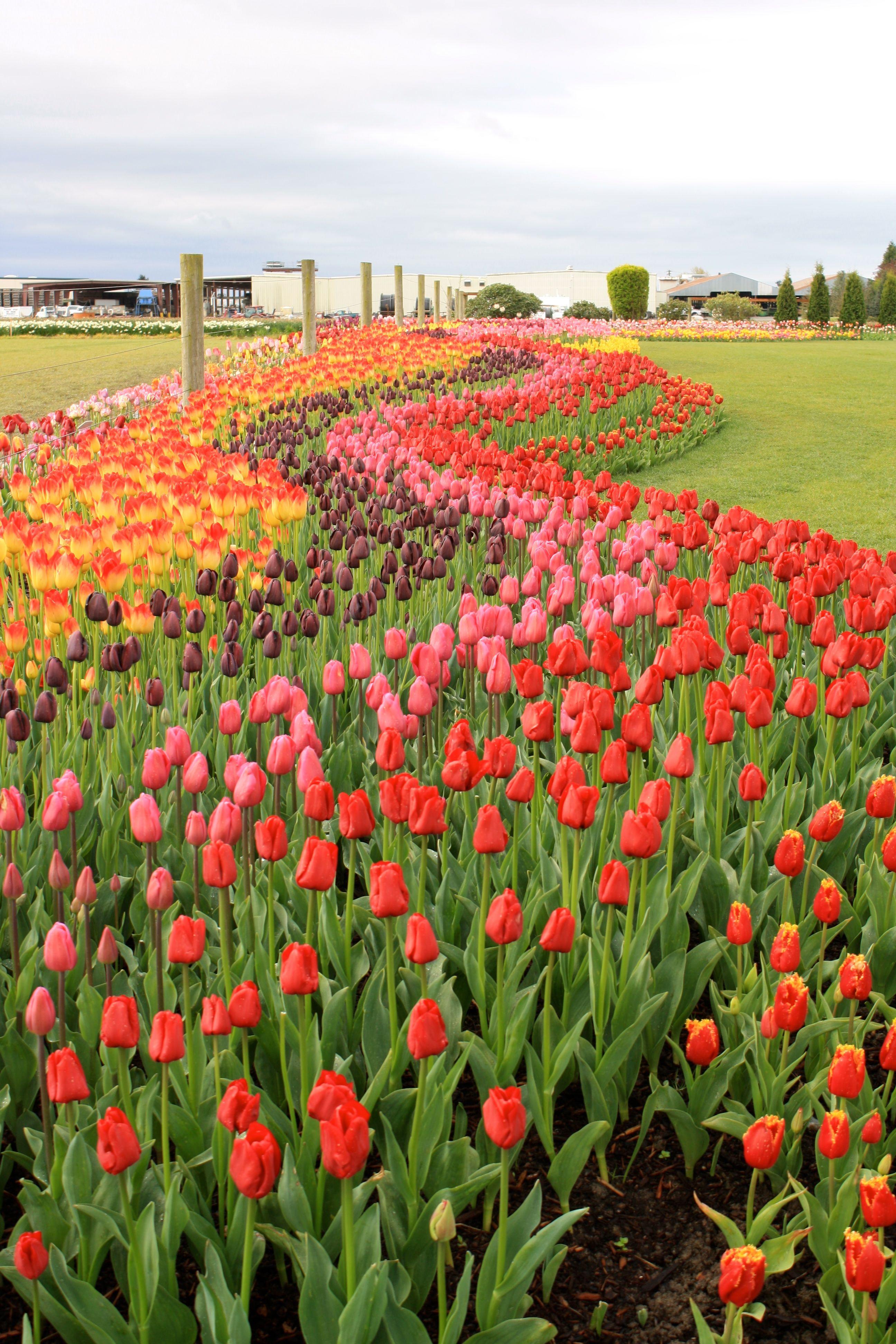 Pin By Lori Wood On Eye Candy Beautiful Flowers Garden Flower Garden Seattle Japanese Garden