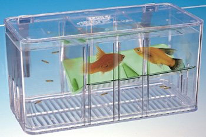 Breeding guppies is easy as guppies will often breed when for Aquarium fish trap