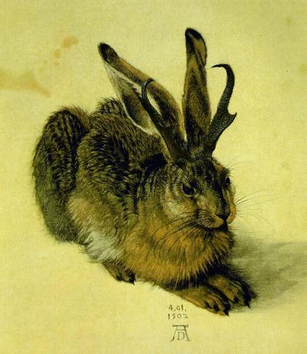 This mutant rabbit is the mythical Jackalope - Strange Sounds