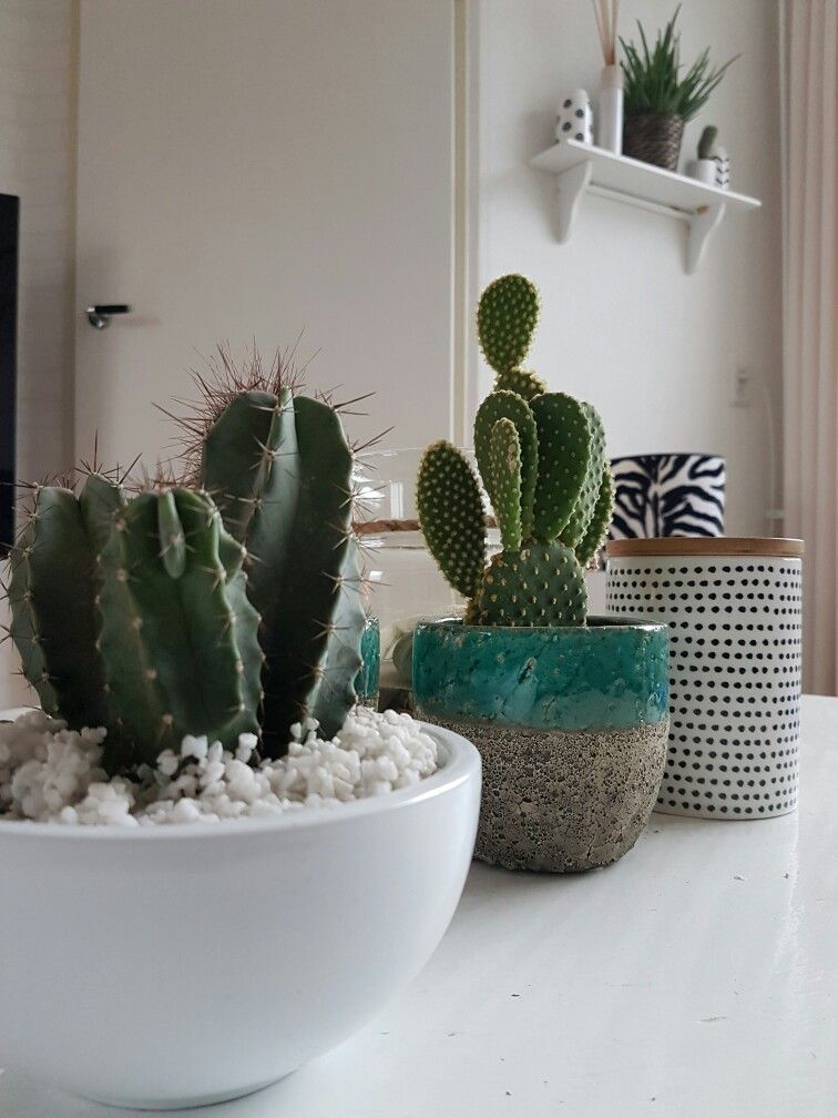 Starting to have a little Obsession for cactusses :)