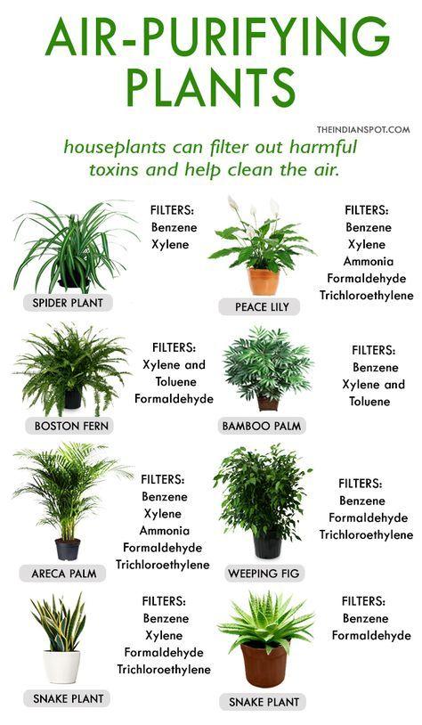 Garden Indoor Ideas Air Purifier 50 Best Ideas Plants House Plants Indoor Best Indoor Plants