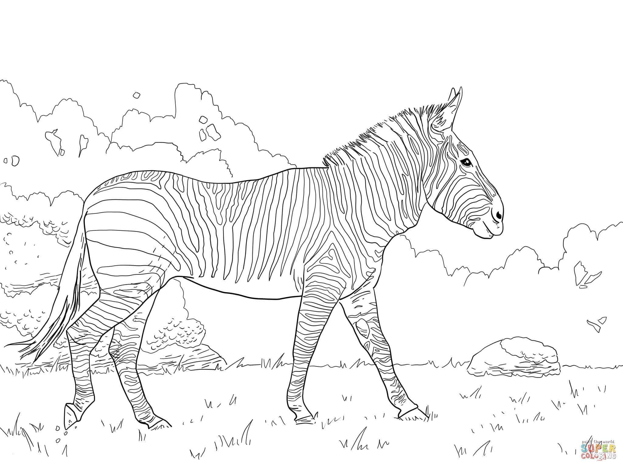 Pin On The Zebra Drawings And Artwork
