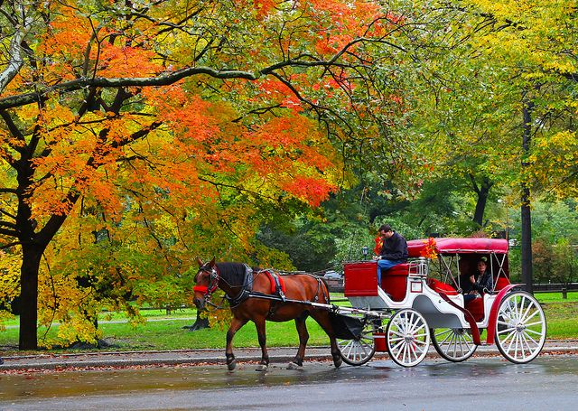 Horse ride in Central Park Fall 1 | Horse carriage rides, Park in new york, Central  park
