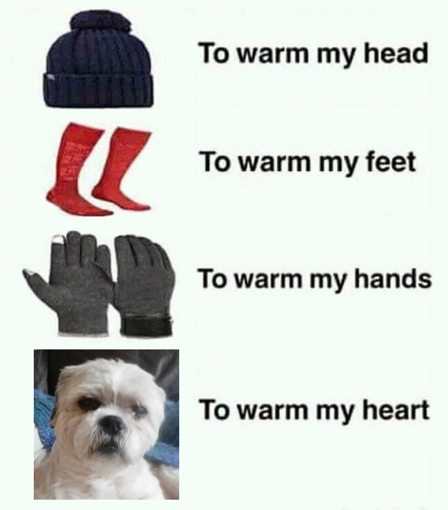 Winter For Dog Lover In 2020 Shih Tzu Loveable Dog Charities