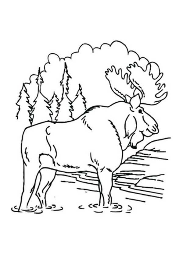 Moose, : Moose is Like Playing Mud Coloring Page   Patterns ...