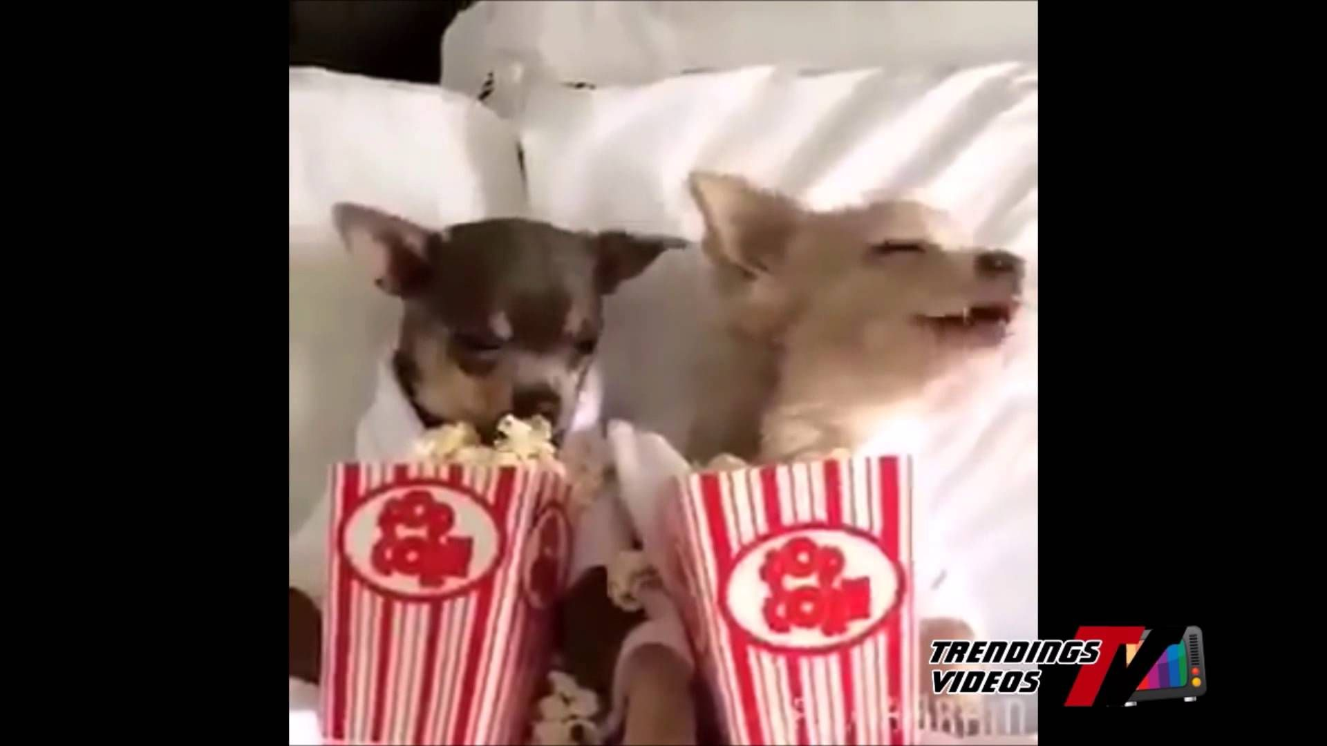 Dogs Eating Popcorn Youtube Dog Love Dogs Dog Eating