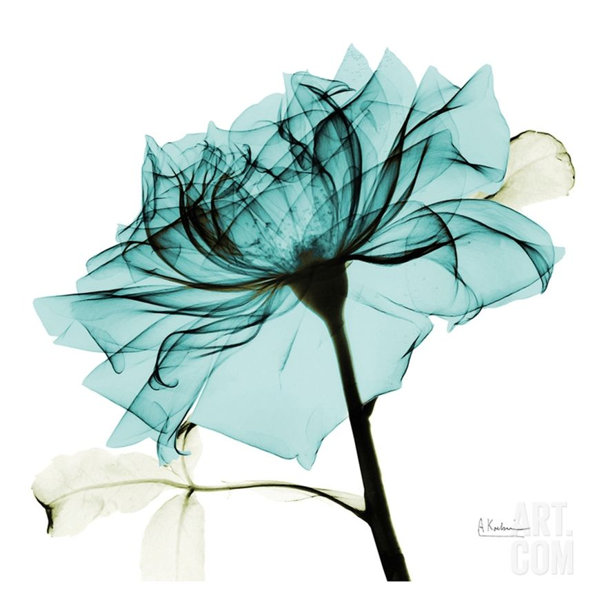 X Ray Of Rose Watercolor Amazing Tattoo For Me Yeti: Teal Rose 2 Prints By Albert Koetsier In 2019