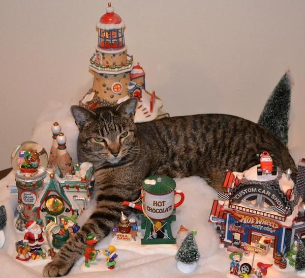 This is Jack, he thinks he's King Kong in the Christmas Village.