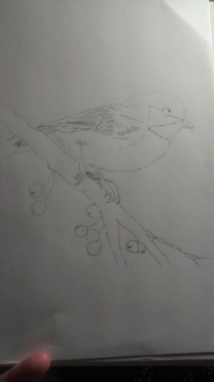 A very light penciled sketch of a bird