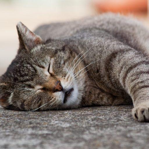 Tierfreunde Bitte schaut auch auf Amazon die Kombinationsangebote an um so etwas Geld zu sparen.Die vorgestellten Gegenstände sollten aber unbedingt schon vorhanden sein bevor die Katze einzieht. http://www.katzen-pflegen.seite.info