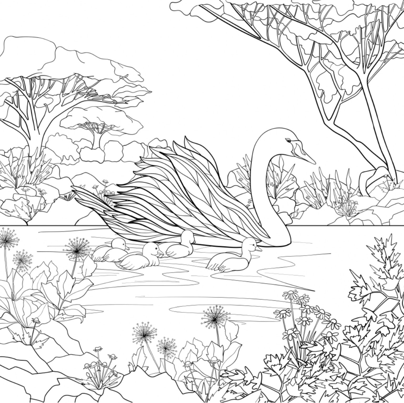 Swan Adult Coloring Page Realistic