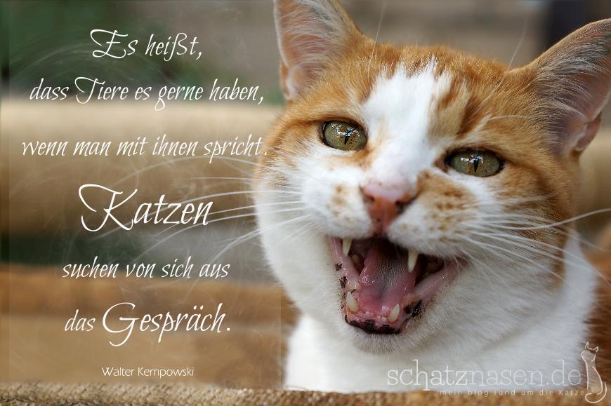 Lustige Sprüche über Katzen