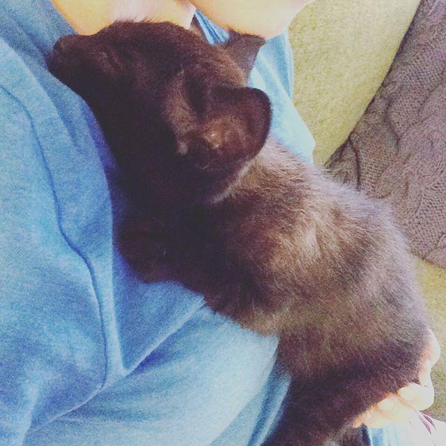 どこででも寝ちゃう頃ありますよね😻 #猫 #ねこ #野良猫 #cat #cats #愛猫 #マシュー #ましゅお #黒猫 #blackcat #ねこ部 #japan #tokyo #みんねこ #picneko #仔猫 #子猫