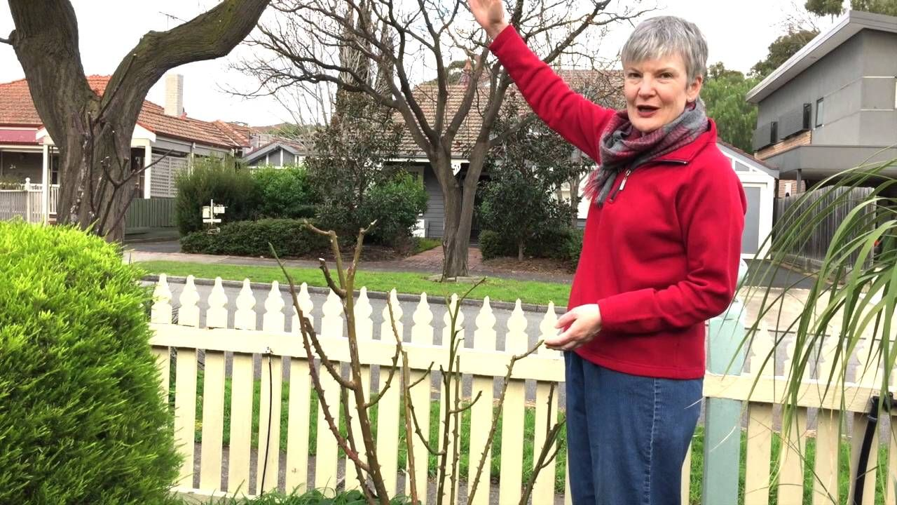 Rose pruning youtube plants pinterest rose bush and plants