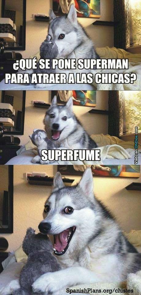 Chistes Memes Y Mas Pines Populares En Pinterest Jeisonalba27 Gmail Com Gmail Memes De Perros Graciosos Memes Divertidos Humor Divertido Sobre Animales