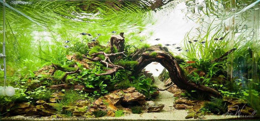 90x45x45cm Planted Dragon Stone Aquascape Freshwater Aquarium Plants Fresh Water Fish Tank Aquascape