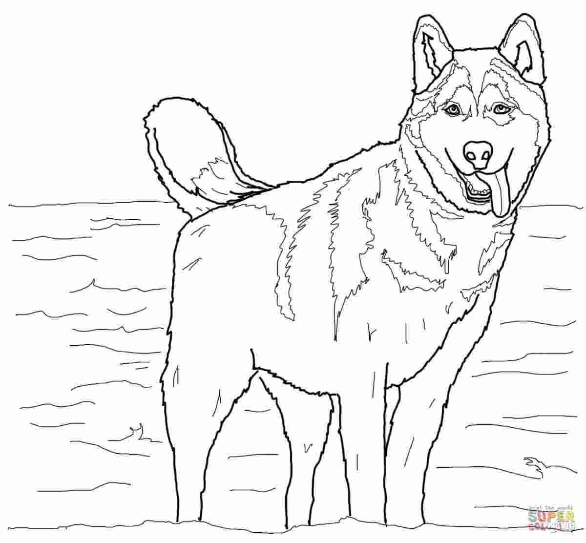 Coloring Pages: Husky coloring pages free | New 100 ...