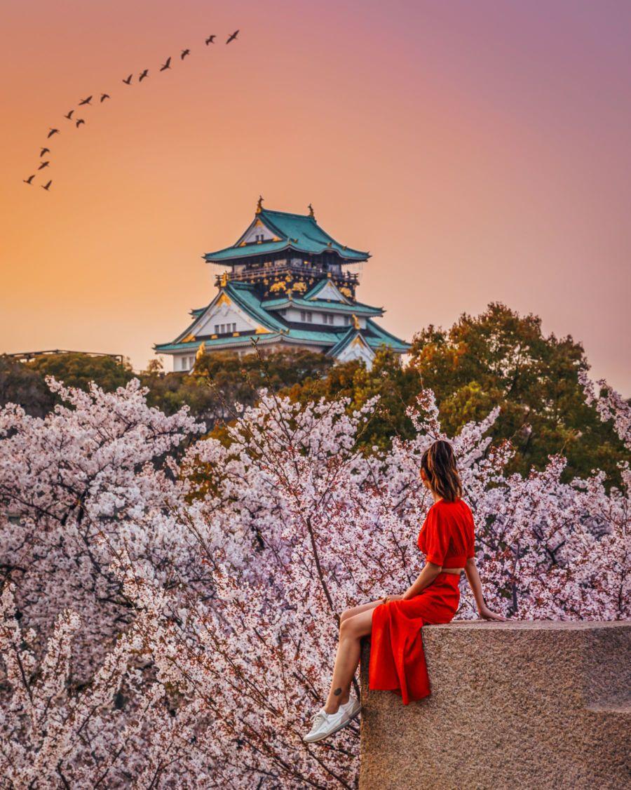 Instagrammable Spots In Japan 7 Gorgeous Spots For Cherry Blossoms In Japan Cherry Blossom Japan Japan Travel Japan Travel Guide