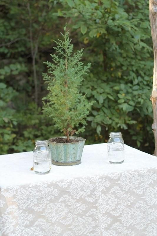 Unity tree wedding ceremony soil from both of our homes, to