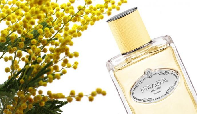 c1316a53 Fragrance Review, Scents: Prada Mimosa Les Infusions Collection ...