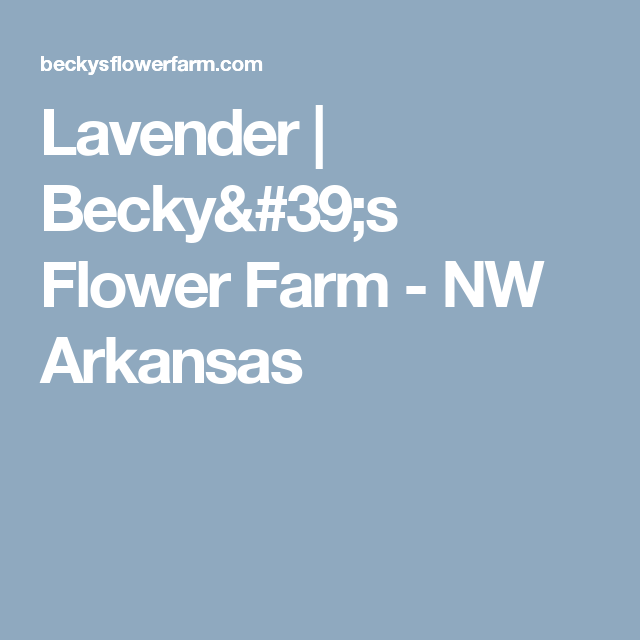 Lavender | Becky's Flower Farm - NW Arkansas