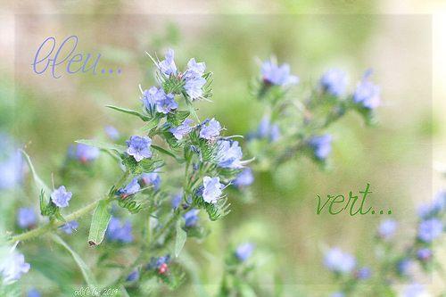 fleur bleue  by odile lm