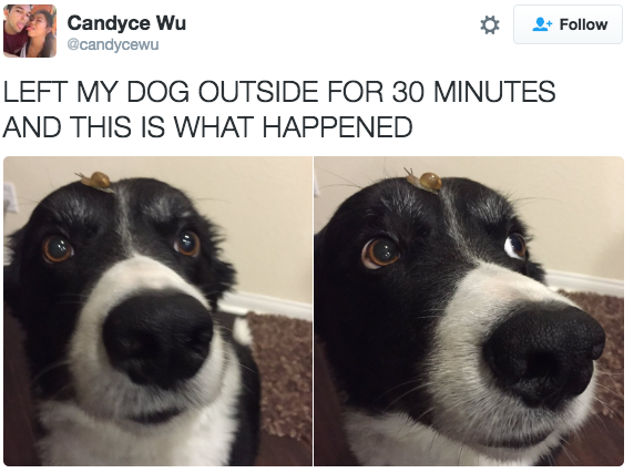 This pup who is not so sure about his new friend.   23 Dogs Who Will Make You A Happier Person