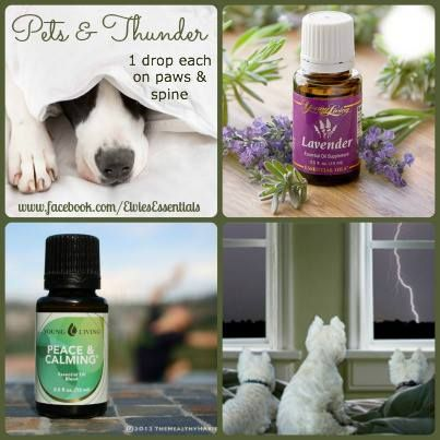 Young Living Lavender And Peace Amp Calming For Pets And