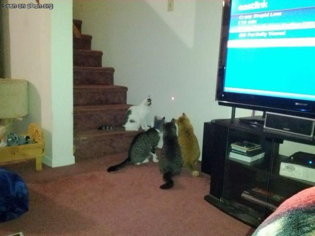 the laserdot, interesting cats since 1593