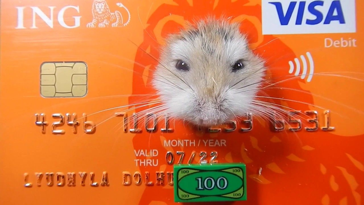 3d Bank Card Bank Card Funny Hamsters Cards
