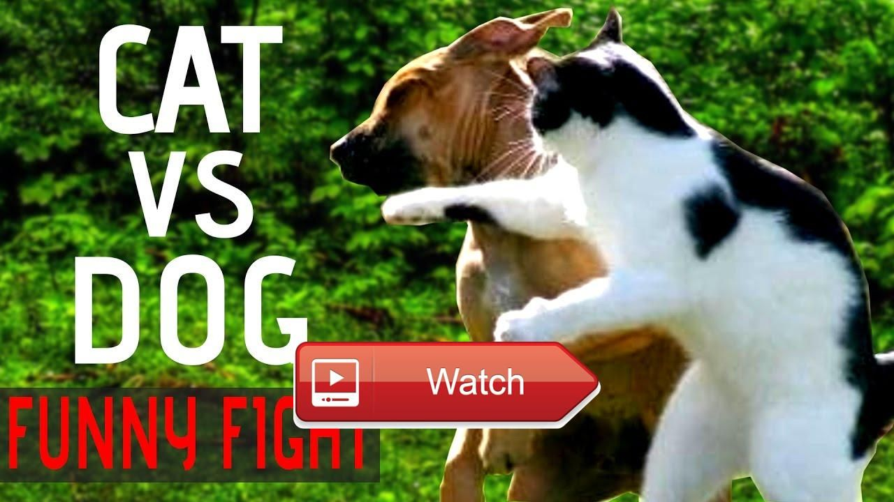 Funny Cat And Funny Dog Fighting Videos Fail pilation Best New
