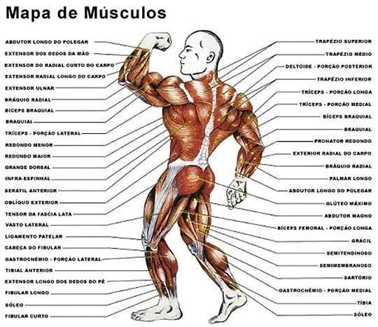 Atlas Corpo Humano Em 2020 Corpo Humano Musculos Do Corpo