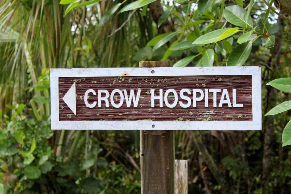 Clinic for Rehabilitation of Wildlife (CROW