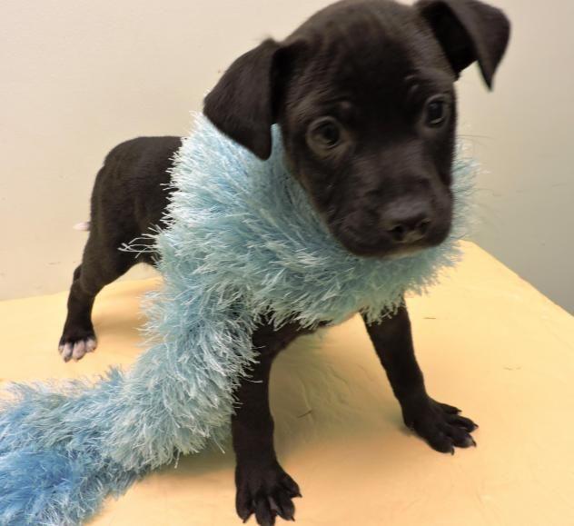 Adopt Lilah On Adoptable Beagle Beagle Dog Pet Finder
