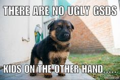 Funny Memes For Lovers : Funny german shepherd meme for dog lovers click here to check out