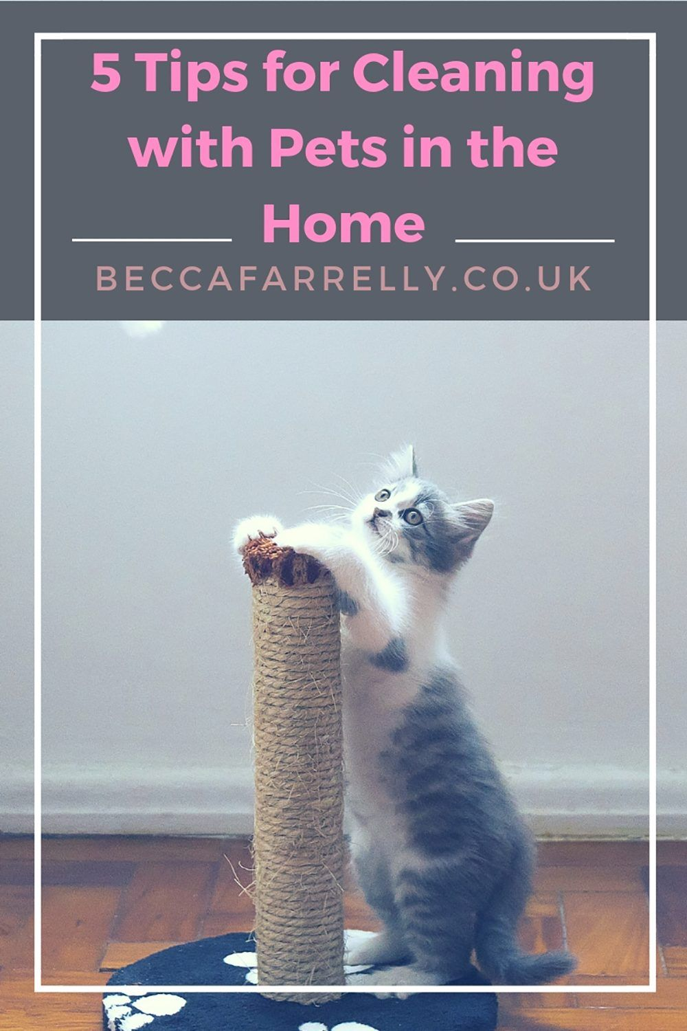 5 Tips for Cleaning with Pets in the Home Clean house