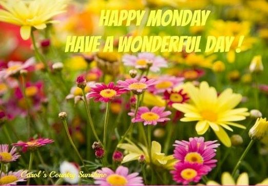 Image result for Happy Monday with Spring flowers