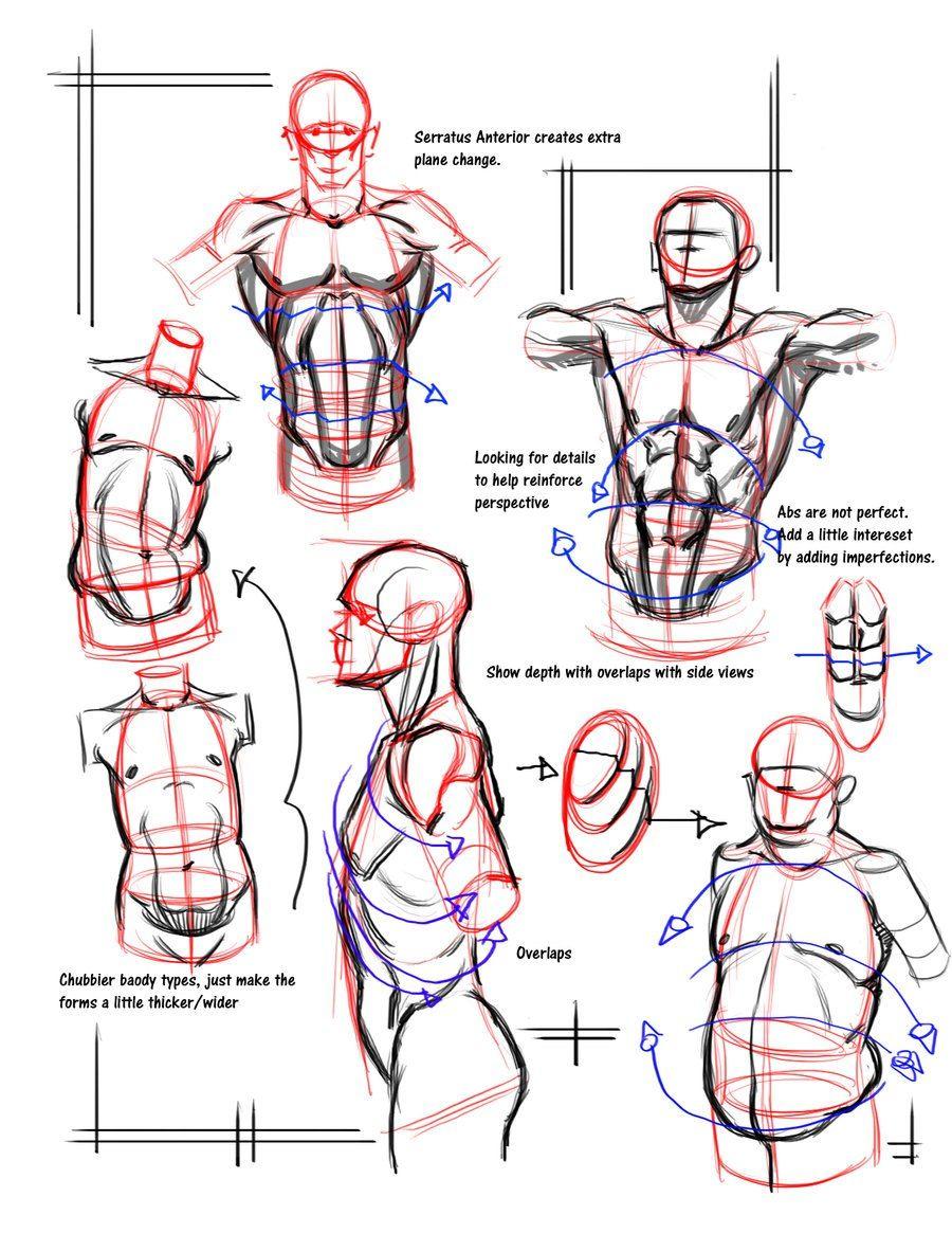 eq_3xUMG-6c.jpg (900×1165)   Tutors   Pinterest   Anatomy, Art ...
