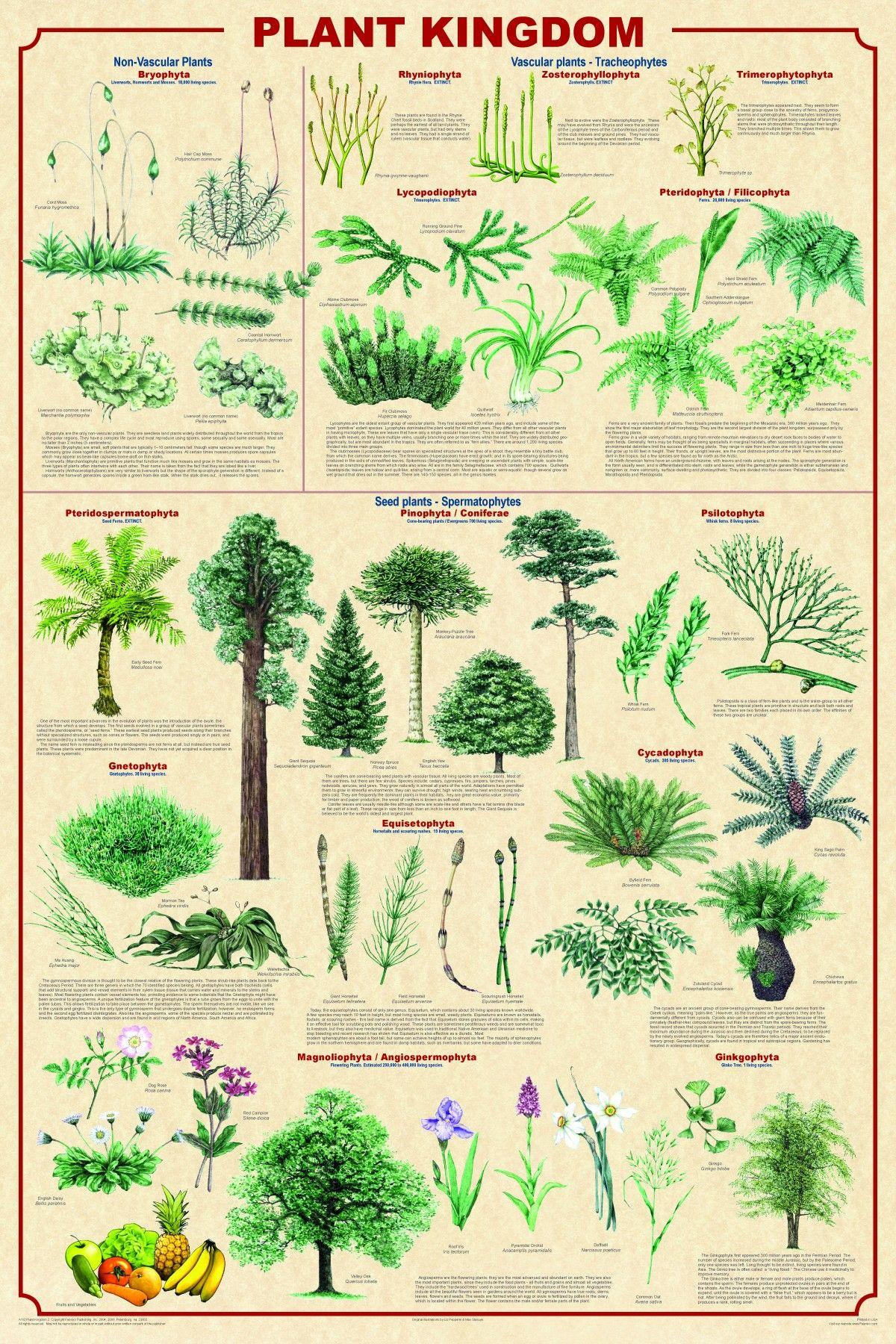 Infographic Defining Plant Kingdom Infographics