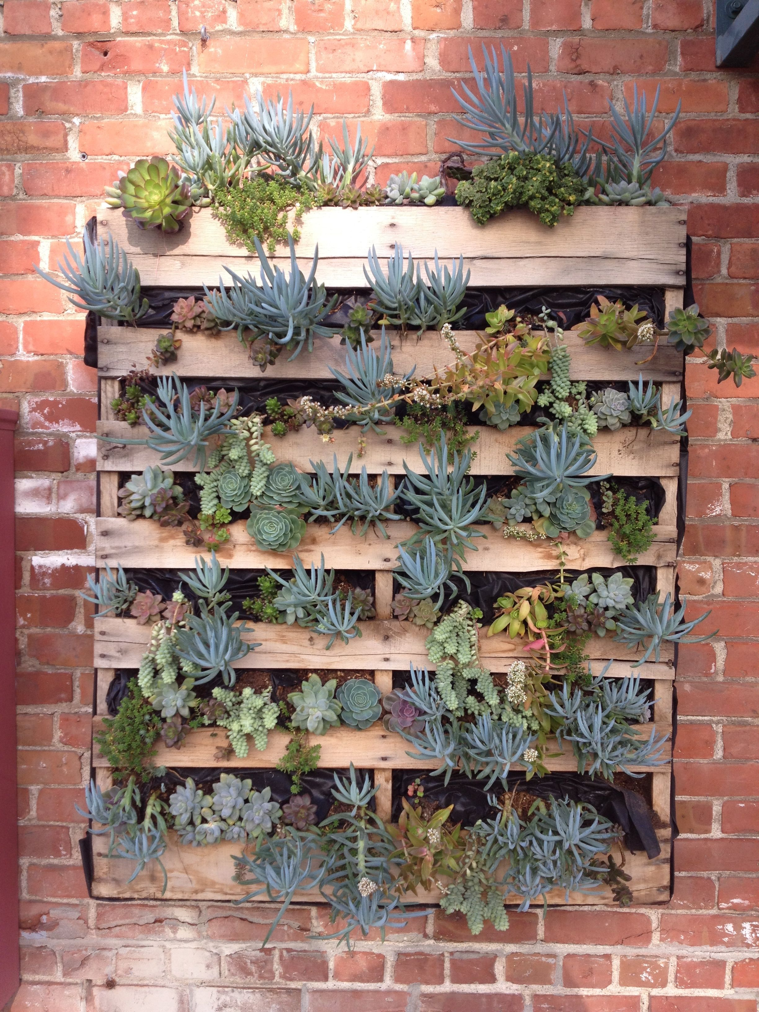 Succulents pallet wall at the Oakland Supply Company ...