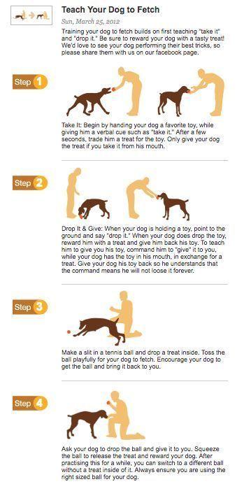 Teach Your Dog To Fetch Dogobediencetipsandadvice Dog Training