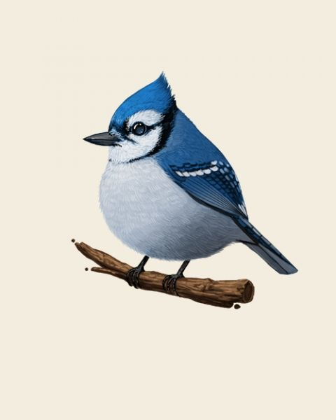 Resources Inspiration Blue Jay Birds Mike Mitchell