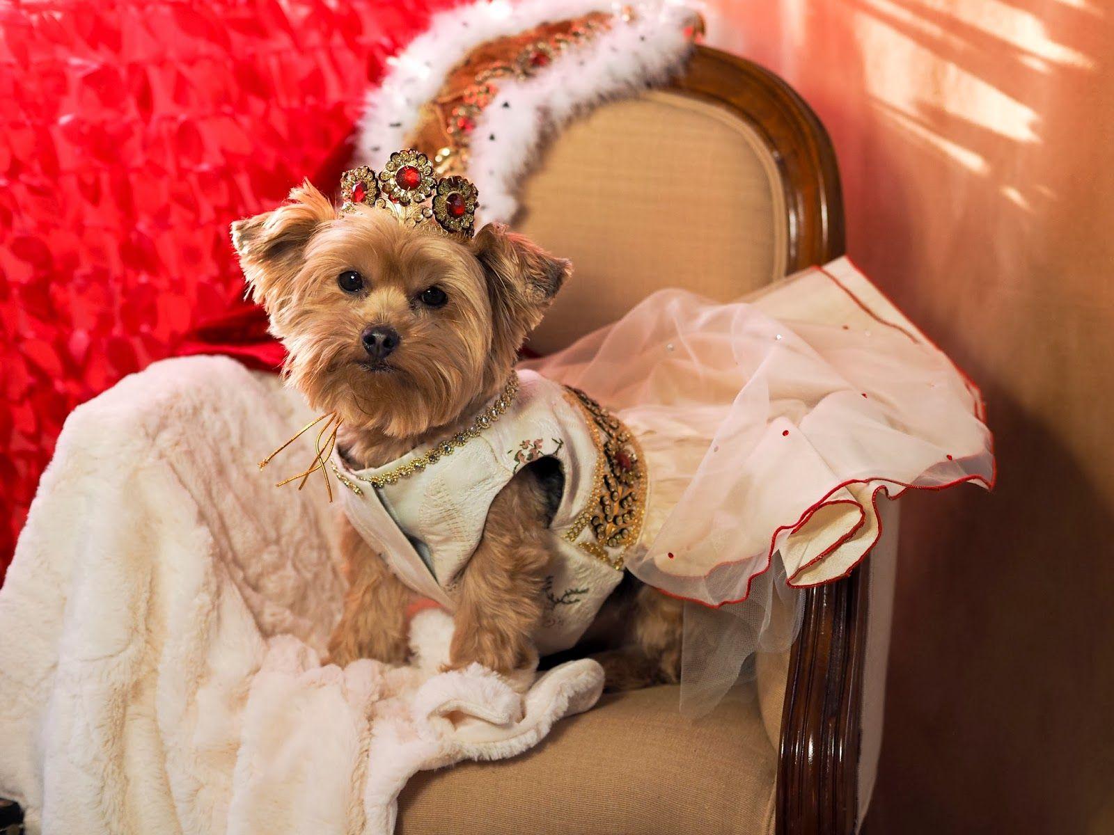 Happy Valentine's Day from The Doggie Nanny! Valentines