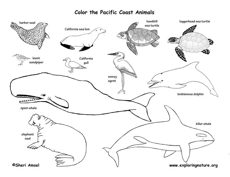 Washington Exploring Nature Educational Resource Fish Coloring Page Arctic Tundra Animals Felt Animal Patterns